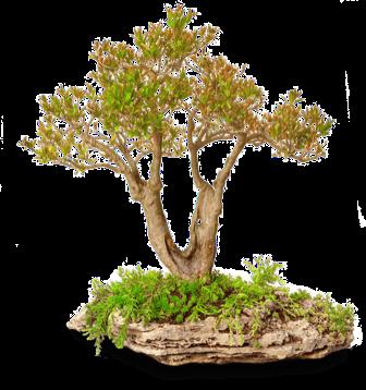 Dreviny